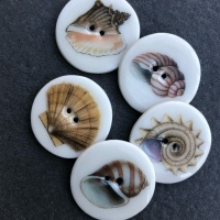 Assorted Shells Medium